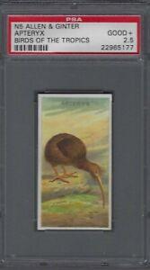 1889-N5-Allen-amp-Ginter-Birds-of-the-Tropics-Apteryx-Graded-PSA-2-5