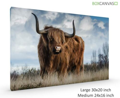 NATURE 04 HIGHLAND COW SCOTLAND PHOTO GALLERY WRAP