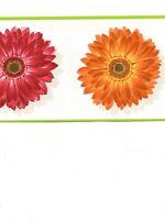 Colorful Gerber Daisy With Lime Green Edge Wallpaper Border Cu78220
