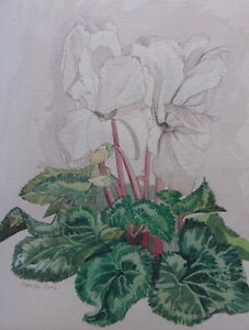 WATERCOLOUR-STUDY-OF-A-PLANT-ARTIST-CAROLYN-STEEL-FREE-SHIPPING-TO-ENGLAND