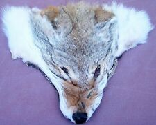 GENUINE AMERICAN COYOTE FACE PELT, NATIVE CRAFTS