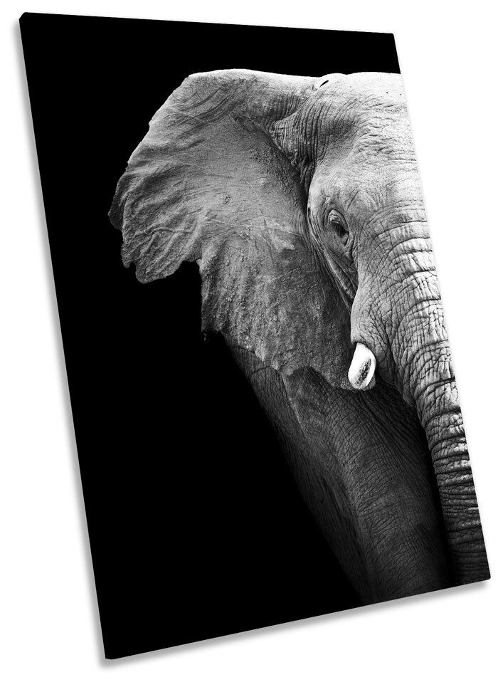 Elephant Mono Framed CANVAS WALL ART Picture Print