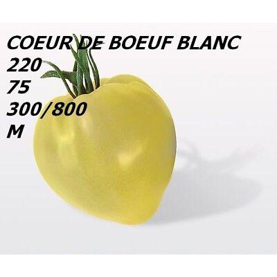 25 GRAINES DE TOMATE COEUR DE BOEUF BLANC  CULTIVEES SANS PRODUIT CHIMIQUE