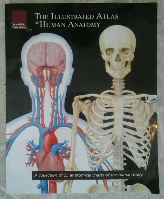 The Illustrated Atlas Of Human Anatomy 2006 Paperback Ebay