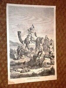 Carovana-Persiana-a-Riposo-Persia-Cammello-Dromedario