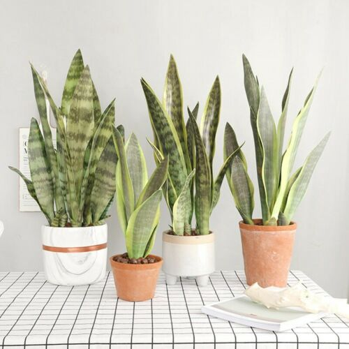Artificial Snake Plant Fake Flower Simulation Succulent Agave Home Decor New