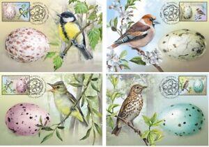 2020-Belarus-Bird-eggs-Birds-of-Belarus-4-cards