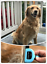 Dog-Brush-for-Shedding-Best-Cat-Grooming-Comb-Tools-Hair-Pet-Trimmer-Clipper-B thumbnail 7