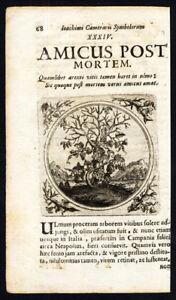 Antique-Print-GRAPE-VINE-FRIENDS-AFTER-DEATH-PROVERB-Sibmacher-Camerarius-1697