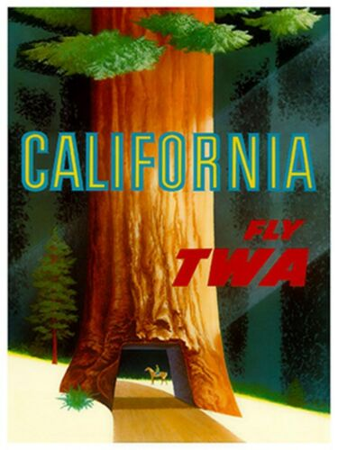 "Art California Redwoods Travel Poster Vintage Rare Hot New Original 12x16/"" TR20"
