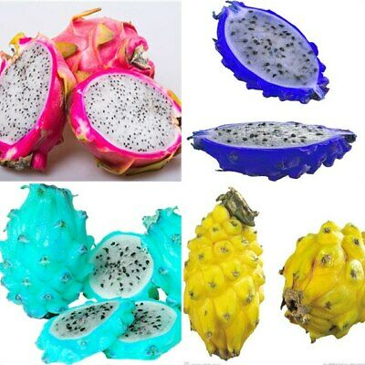 100 PCS Seeds Sweet Pitaya Bonsai Tree Plants Dragon Fruit Hylocereus Fruit 2021