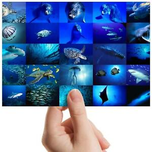 Marine-Life-Collage-Shark-Small-Photograph-6-034-x-4-034-Art-Print-Photo-Gift-8936