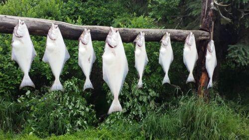 Cook Inlet 3  to 10 night Alaska Salmon and Halibut Fishing trip Kenai River