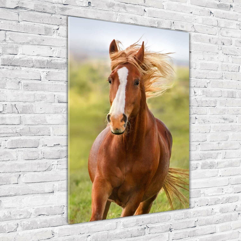 Wand-Bild Kunstdruck aus Acryl-Glas Hochformat 70x100 Pferd Galopp