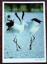 Carte postale Tsuneo Hayashida,chant d'oiseaux,photo    postcard