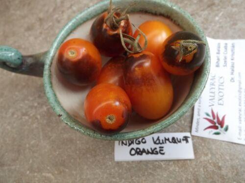 Samen 5 Tomate Indigo Kumquat Orange Atemberaubend und Fein!