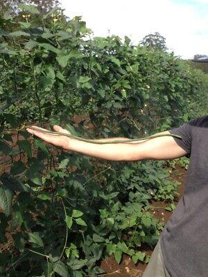 60 Seeds LONG BEAN BROWN BEAN ASIAN Vegetable Garden Plant SNAKE BEAN