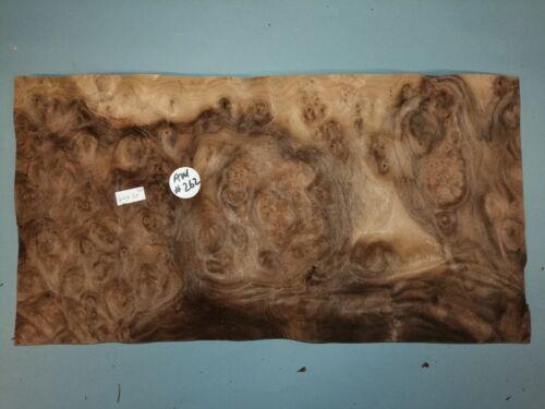 CONSECUTIVE SHEETS OF AMERICAN BURR WALNUT VENEER 40 X 20 cm AM #262 MARQUETRY