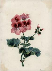 BOTANICAL-STILL-LIFE-FLOWERS-FLORAL-STUDY-Watercolour-Painting-c1853-SIGNED