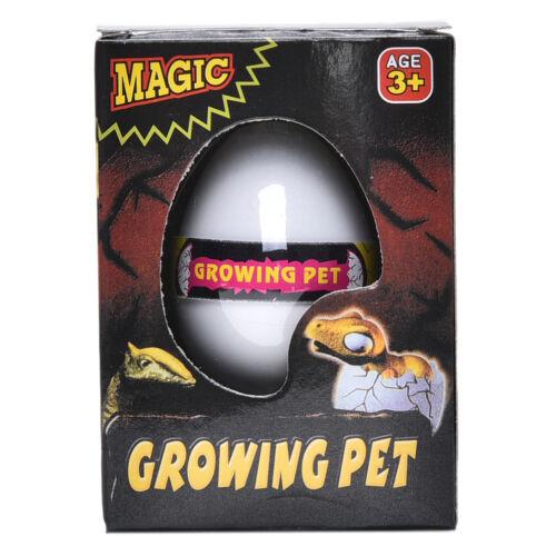 1 Pcs Water Hatching Egg Box Large Expansion Animal Egg Kids Educational Toy DS