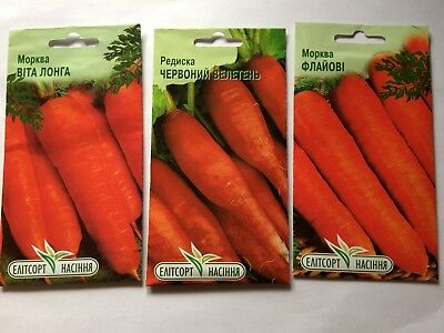 Posten Nr4 Karottensamen v.Russland//Ukraine Karotte Möhre VITA LONGA der Riese