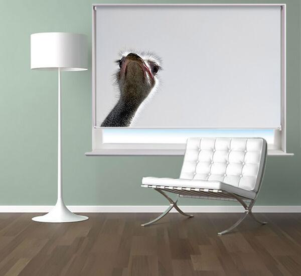 Imprimé photo store à animal enrouleur store à l'autruche animal à photo Noir out blind 6ad06c