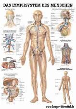 NEU Lehrtafel: Das Lymphsystem des Menschen 50 cm x 70 cm laminiert