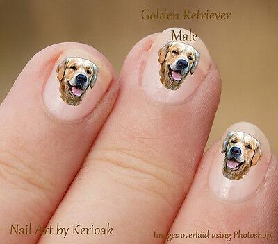Golden Retriever, Male Portrait,   24 Dog Nail Art Stickers Decals