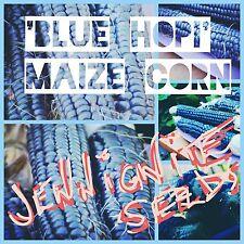 SWEET CORN (MAIZE) 'Blue Hopi' 10 SEEDS ☆RARE☆UNTREATED☆NON-GMO☆ Huge plants~