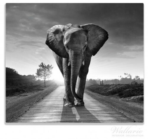 Elefant Sonnenaufgang Afrika Herdabdeckplatte 1-teilig aus Glas 60x52cm