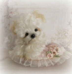 Sweet-Fluffy-OOAK-Mini-Miniature-Artist-Puppy-Dog-by-Janice-Woodard-Booh-Bears
