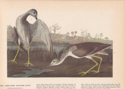 "1942 Vintage AUDUBON BIRDS #308 /""GREATER YELLOW LEGS/"" Color Art Plate Lithograph"