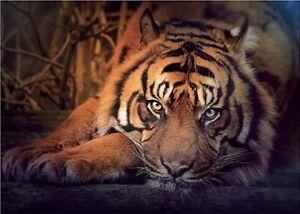 "Puzzles 1000 pieces 48*68 cm ""Siberian tiger"" Step Puzzle 79142."