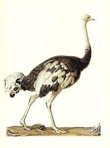 """1977 VINTAGE LAROUSSE /""""BLUE JAY/"""" GORGEOUS BIRD COLOR Art Print Lithograph"""