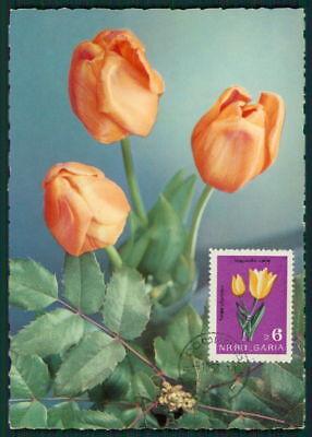 2019 Neuer Stil Bulgarien Mk 1963 Fauna Blumen Tulpen Tulpe Tulip Maximumkarte Maxi Card Mc Bz56 Bequemes GefüHl