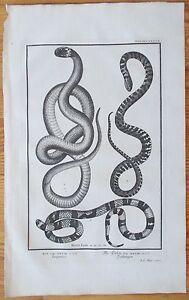 Scheuchzer-Physica-Sacra-Snake-X-Folio-Decorative-Border-1731
