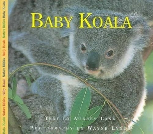 1 of 1 - Baby Koala by Lang, Aubrey -Hcover