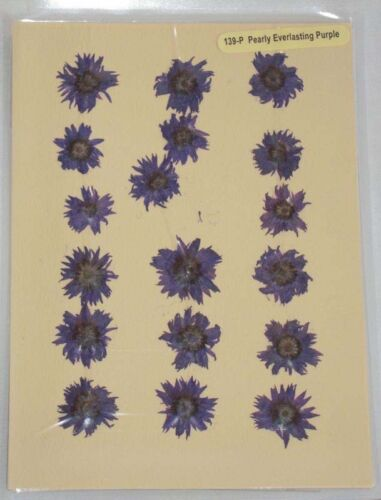 Pearly Purple Real Pressed Flower Craft Embellishments