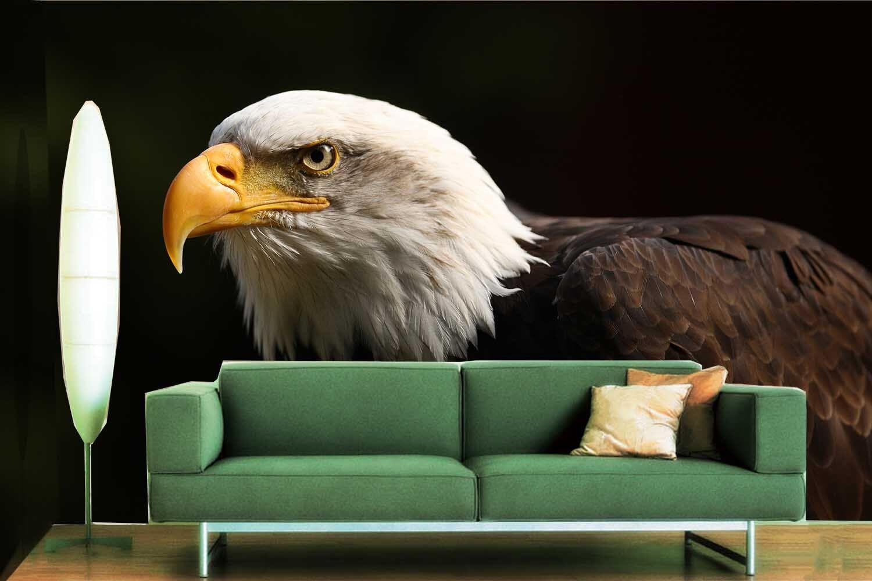 3D Weißer Kopf Schwarz Adler 7 Tapete Wandgemälde Tapete Tapeten Bild Familie DE   Qualität und Quantität garantiert    Hohe Qualität Und Geringen Overhead    Neuheit Spielzeug