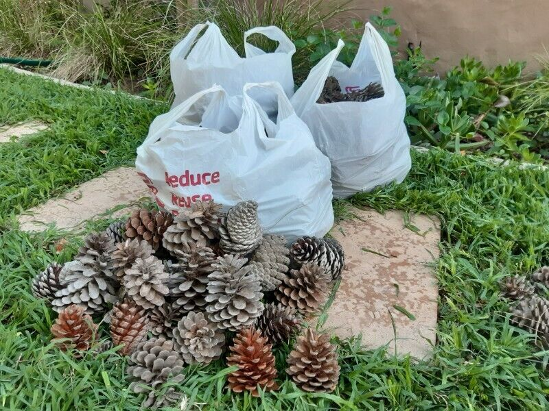 Pine cones / Dennebolle - Christmas, Table, Garden , Wedding Decorations / Eco-friendly Fire lighter