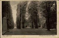 Bad Pyrmont Niedersachsen Weserbergland AK ~1920/30 Park Allee Parkanlage Bäume