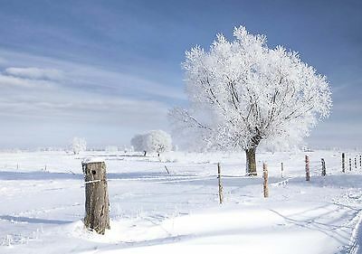Christmas Card Winter Walk - Snow Scene Landscapes Fast Despatch & FREEPOST