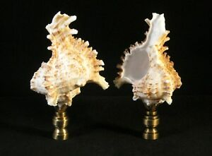 Lamp Finial-SEA SNAIL SHELL W/ Polished or Antique Brass Base (1-PC.)-FS