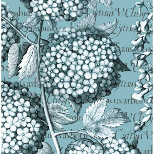 Royal Botanic Gardens Kew Hydrangea greetings card for all occasions