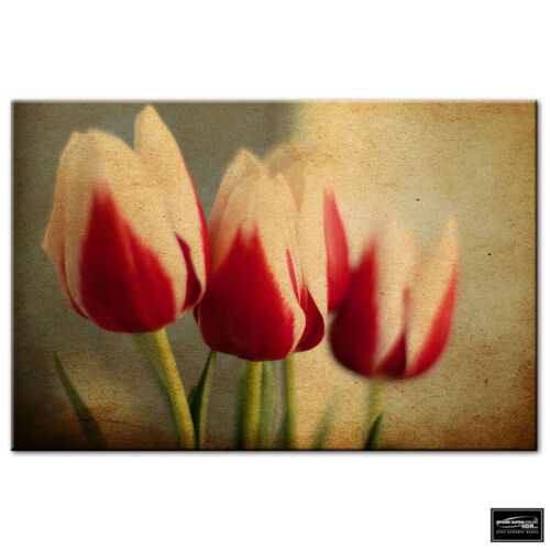 Floral Tulips Flowers   BOX FRAMED CANVAS ART Picture HDR 280gsm