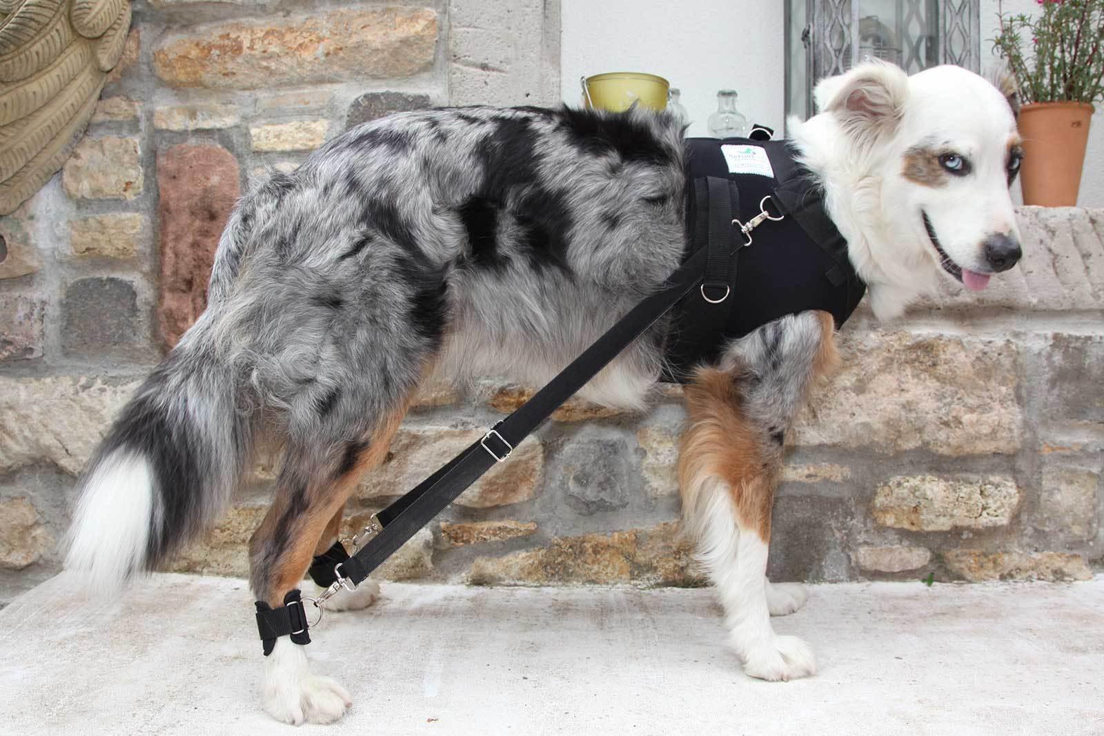 FlexiPander Brustges rr   Trainingsges rr   Rehages rr für Hunde für