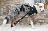 Flexipander Brustgeschirr / Trainingsgeschirr / Rehageschirr Für Hunde Für