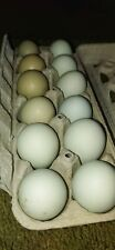 6 Surprise Colored Eggs Green Blue Olive And Inbetween