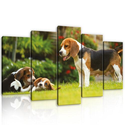 Set (5 pièces) Fabriquée la fresque Image Chien animal maison jardin photo 3fx11375s17
