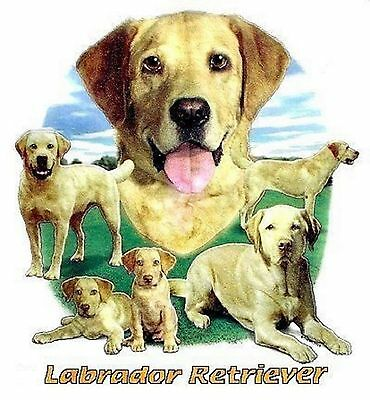 Golden Retriever BISQUIT T Shirt Pick Your Size Youth Medium to 6 X Large